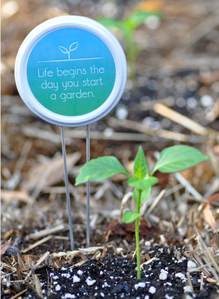 Photo of seedling next to an upcycled mason jar lid painted with the words 'Life begins the day you start a garden.'